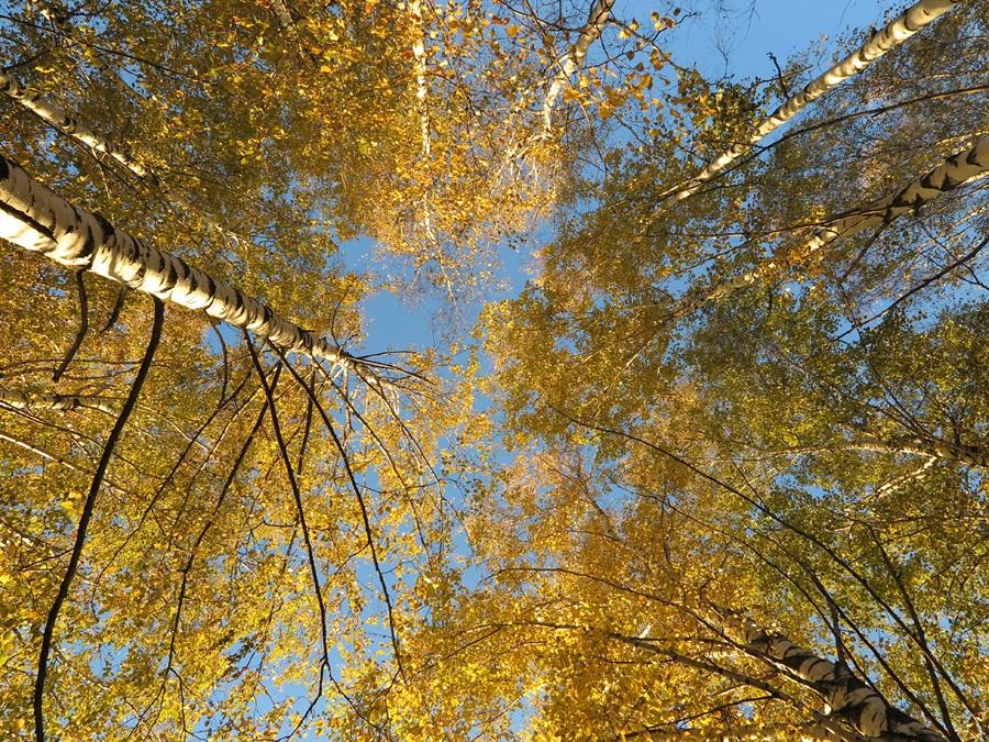 Какие бывают виды лиственных деревьев их фото и названия